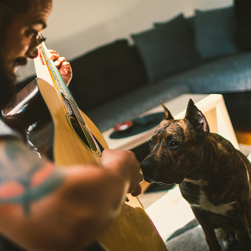 dog next to person playing guitar