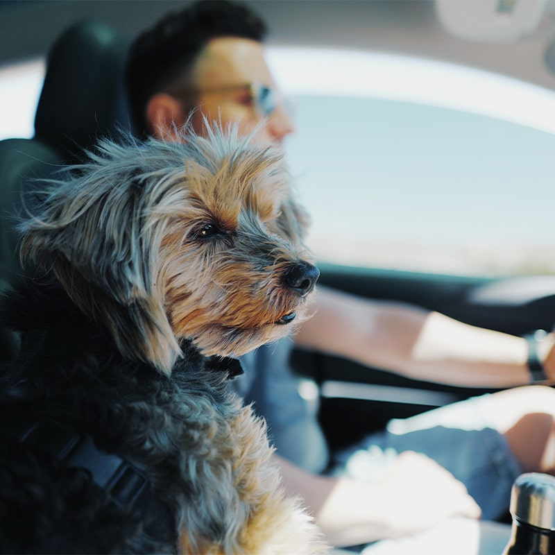 small dog in car