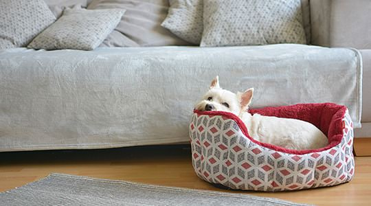 Dog in doggy bed